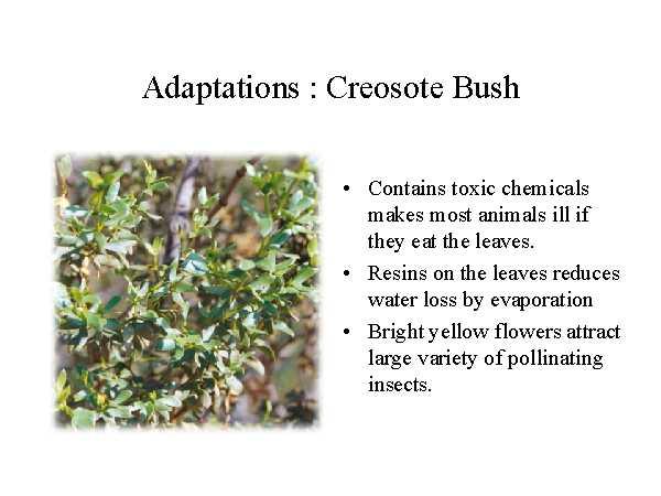 Plant Adaptations - My Arizona